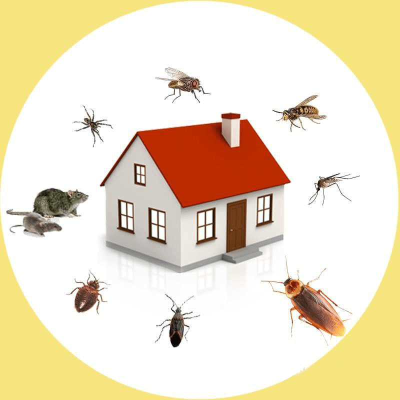 Forever Pest control